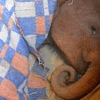 Ashaka, Sheldrick Wildlife Trust © Foto: Susanne Schlesinger | Outback Africa Erlebnisreisen