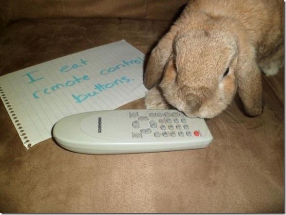 bunny-rabbit-shaming-21