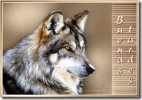 lobos  (1)
