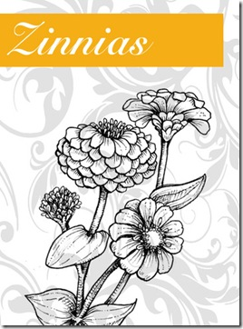 Zinnias Graphic