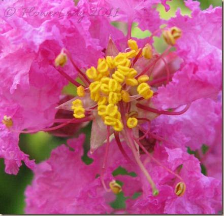 06-11-pink-crepe2