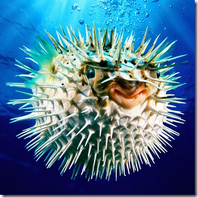 PUFFERFISH: THE DEADLY DISH