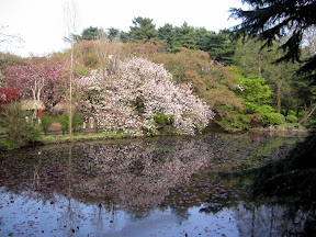 Shinjuku Gyoen National Park in April 2007