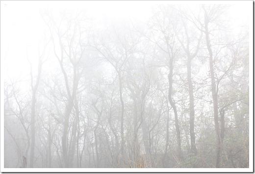 101205_trees2