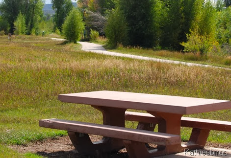 16. picnic table-kab