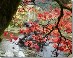 benmore fountain and maples