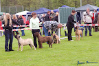 20100513-Bullmastiff-Clubmatch_30886.jpg