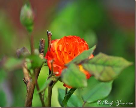 10-17-14 flowers 01