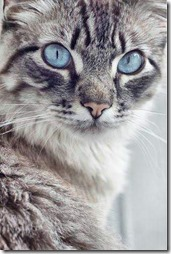 10 -Fotos de gato buscoimagenes (39)