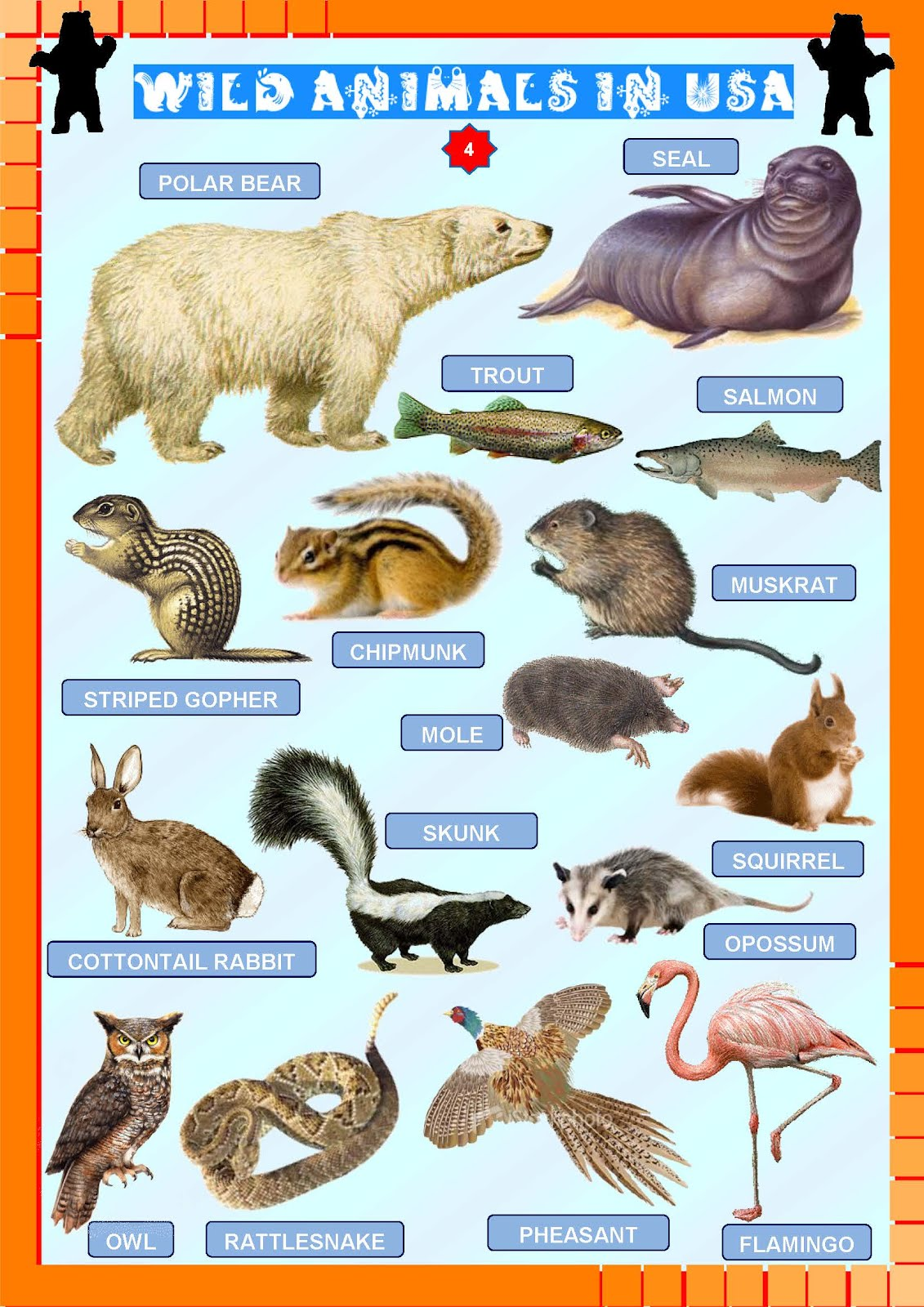 Wild animals from usa