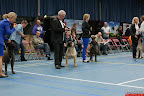 20130510-Bullmastiff-Worldcup-1258.jpg