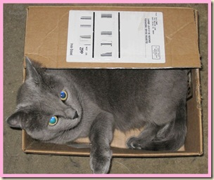 Pungy-in-box