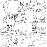 animaatjes-dierentuin-33533.jpg
