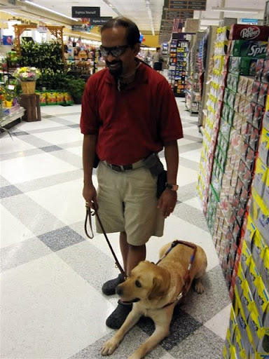 Tilden doing obedience exercises inside the store