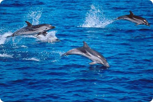 delfini1