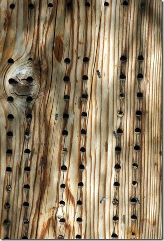 Bee habitat CU 4-29-2013 9-43-11 AM 2361x3474