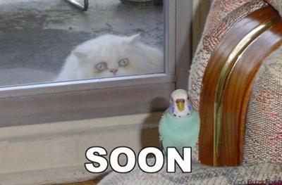 Soon cat parrot