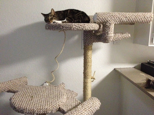 Free Cat Tree Plans Pdf Star trek cat tree diy from