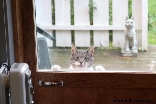Katt som mjauer eller skriker