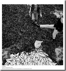 Thames fish