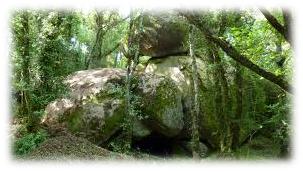La gruta y el bosque