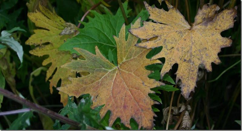 Høstblad3