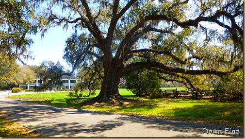 Magnolia Plantation_195