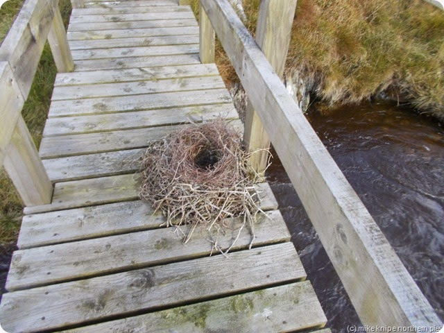 bridge with nest