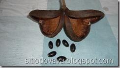 Frutos-e-sementes-da-Castanhola_thum