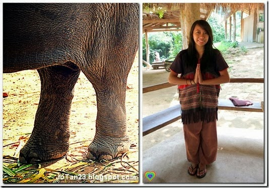 things-to-do-in-chiang-mai-patara-elephant-farm-elephant-owers-for-a-day