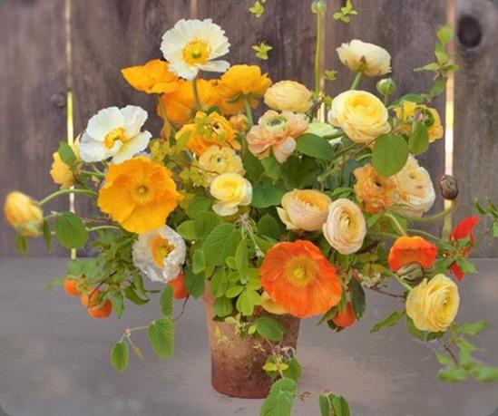 733959_10151550999171011_987351723_n florali
