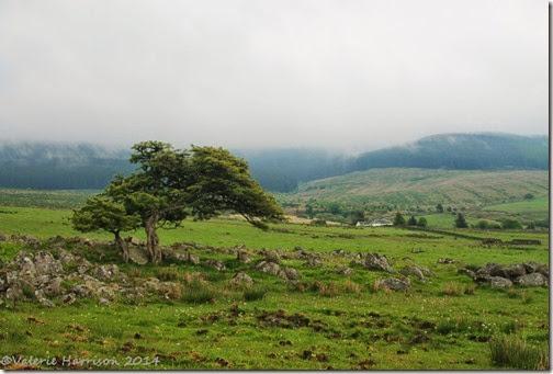 29-boreland