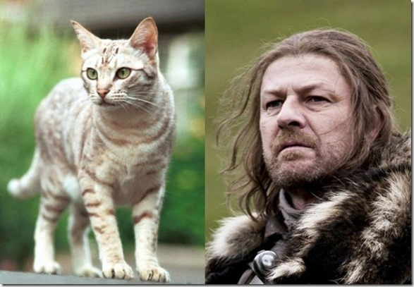 cats-game-thrones-3
