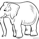 2558_Elephant-1.jpg