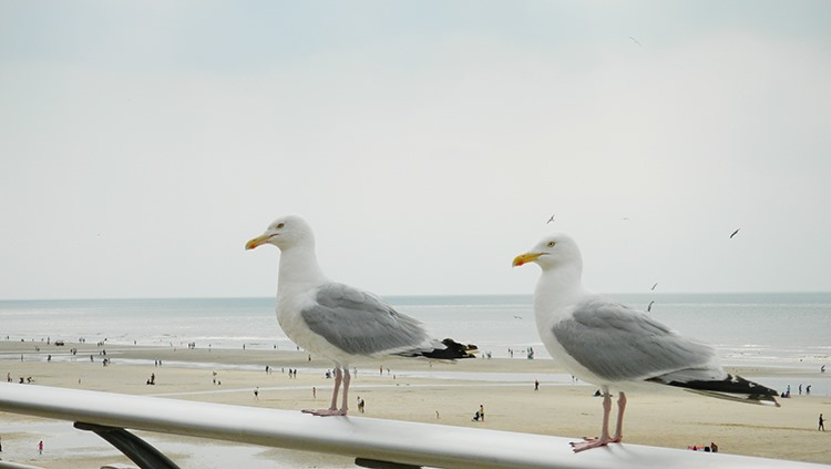 Seagulls-Blackpool-Holiday-Seaside