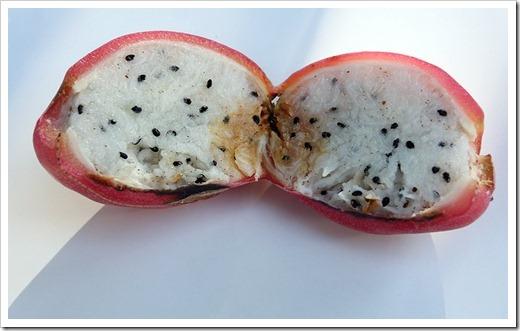 111203_cereus_hildmannianus_fruit3