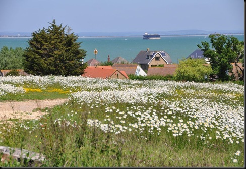 Meadow towards Solent June 2010
