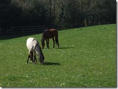 ireland-horses