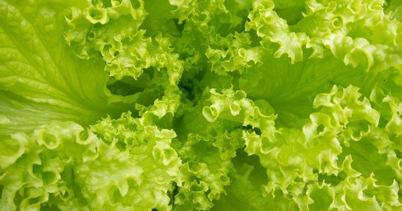 Nature S Essence Saffron Care Kesar Massage Cream