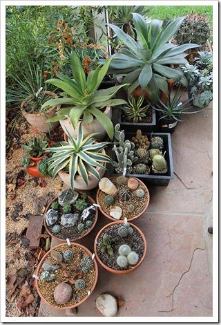 111111_succulents9