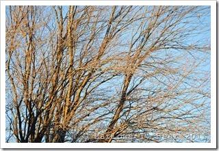 tn_2011-11-11 Winter (9)