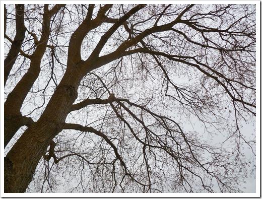 120131_baretree