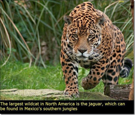 mexico-interesting-facts-008