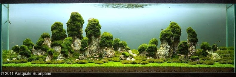 aquascaping-16
