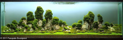 Aquascaping 16. The Pillars Of The Earth, Designed By Pasquale Buonpane Of  Italy. This Tank Is 400 Liters In Size.