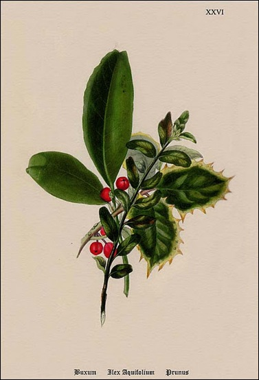 Christmas Botanical