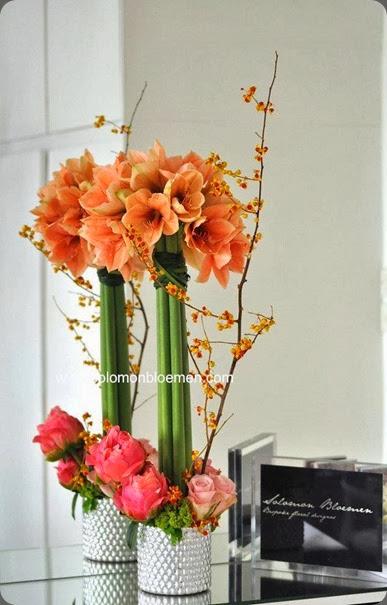 amaryllis solomon bloemen 1240575_10151887530206257_1414904406_n