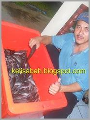 admin kelisabah.blogspot.com