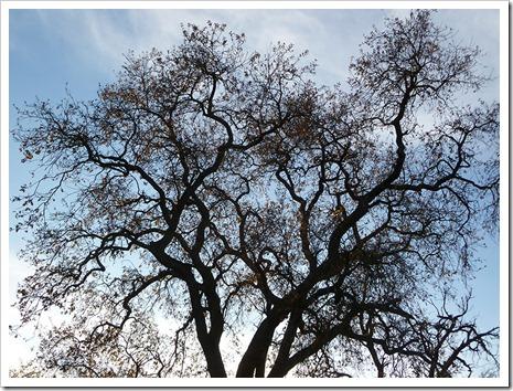 111231_tree_silhouette_9