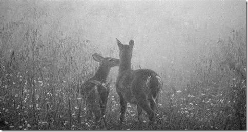 cute-deer-fawn-fawns-flowers-Favim_c